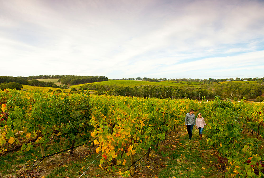 Adelaide Hills Wine Tour Charter A Wine Tour Bus In The